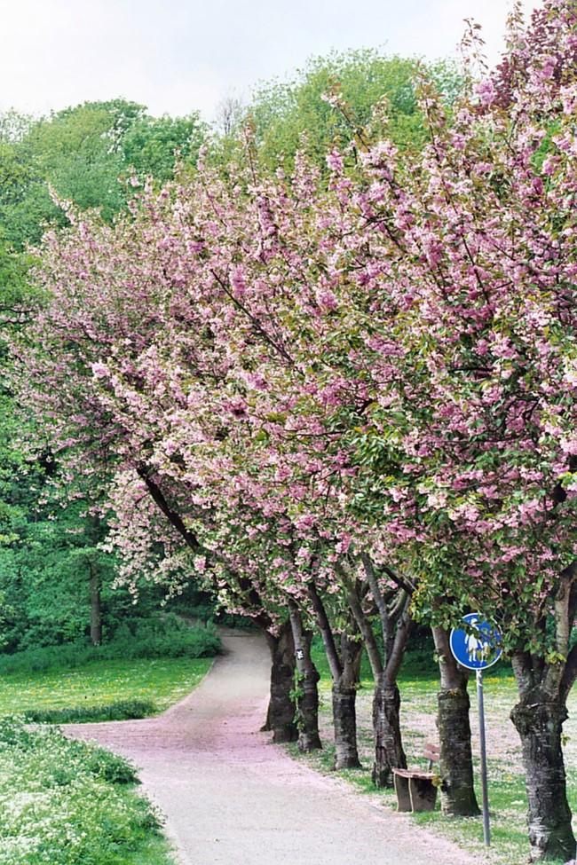 fruehling im moritzpark