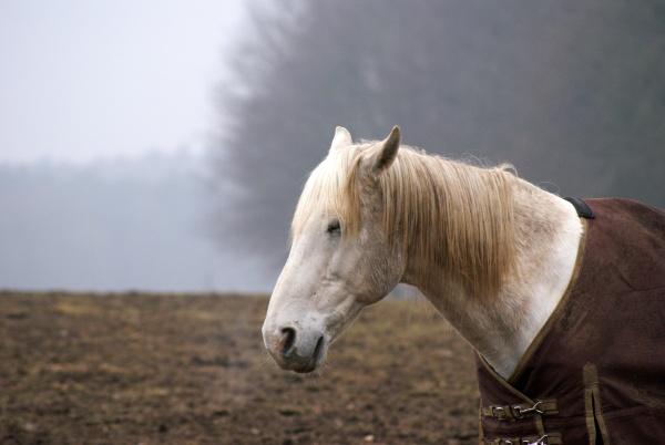 wovon träumen pferde