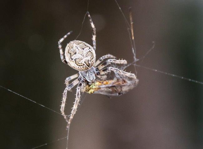 Spiderman in Kleve