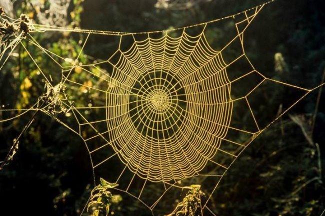 Spinnen spinnen ihre Netze auch in Kleve