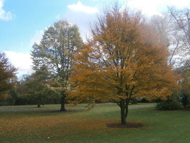 Der Lustgarten von Kleve - Herbstliche Aussichten + Impressionen