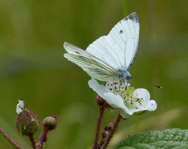 Die Schmetterlinge sind wieder da