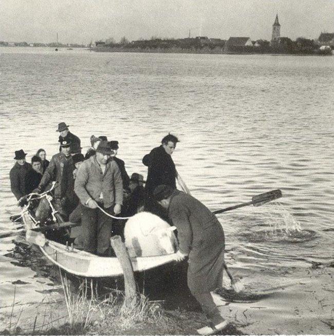 Een schaap op de waterweg naar Schenkenschanz