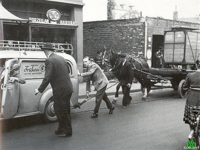 auto zieht pferd