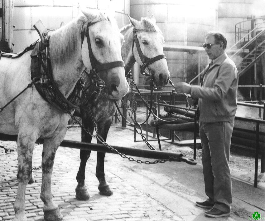 Die Pferde der Margarine-Union von Kleve