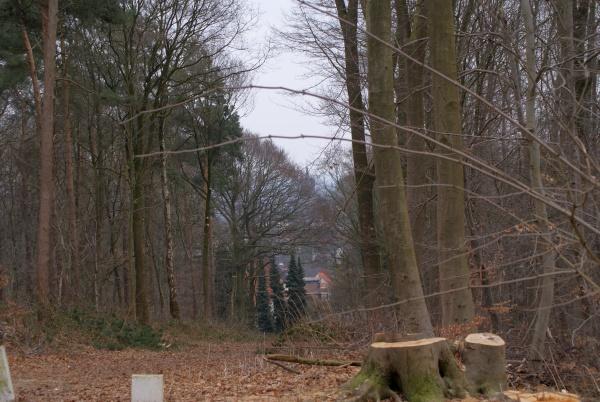 Sichtachse auf die Schwanenburg