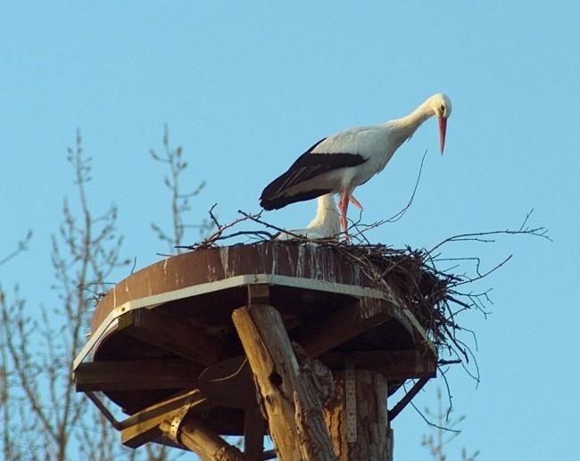 Der ängstliche Storch aus dem Kleverland
