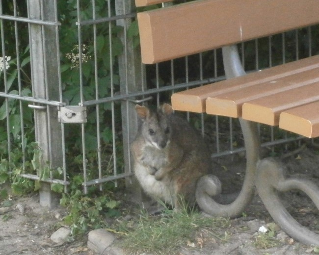 Bezoek ze: De schattige dieren in de Kleefse dierentuin