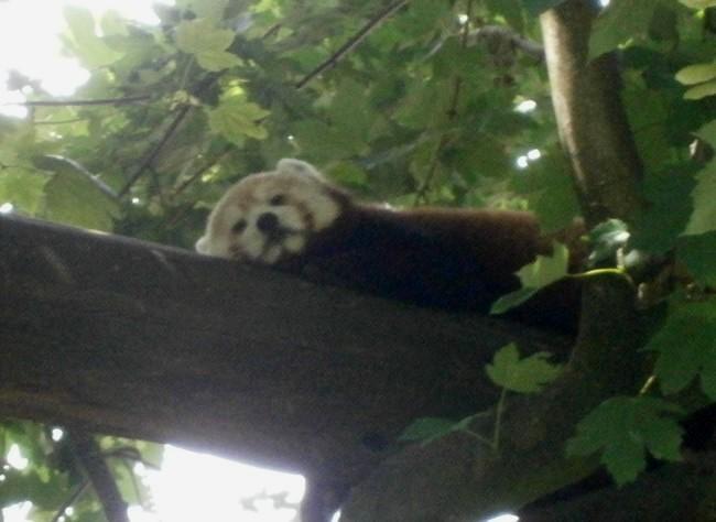 Besuch sie mal: Die niedlichen Tiere im Klever Tiergarten