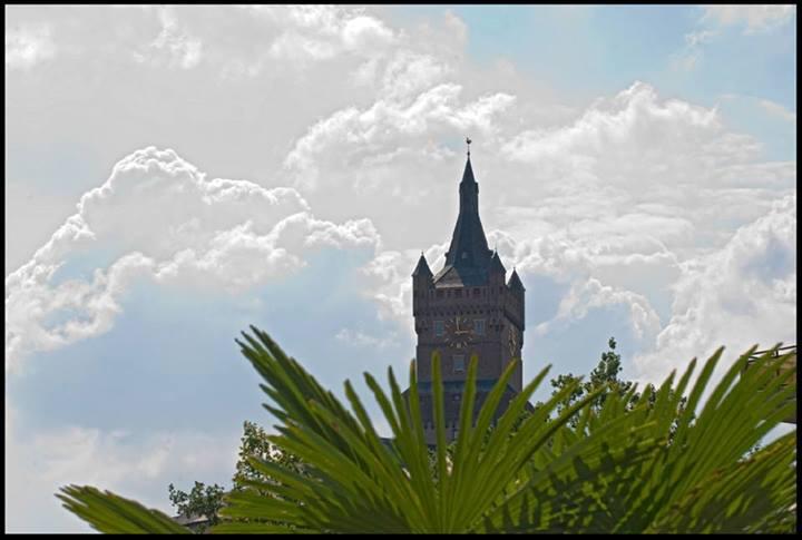 Groene palmen voor de Schwanenburg?