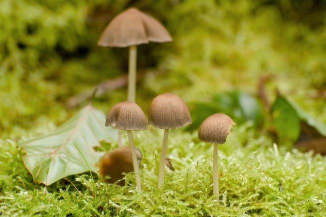 Gehörst Du zu den Pilzsammlern in Kleve?