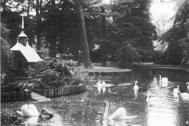 Die Schwäne vom Forstgarten-Teich