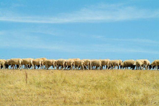 Schafe zählen im Kleverland
