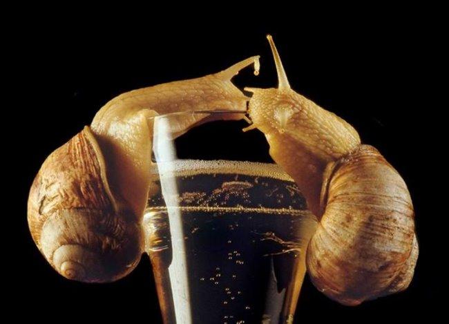 Heel praktisch: we bouwen een Klever slakkenval