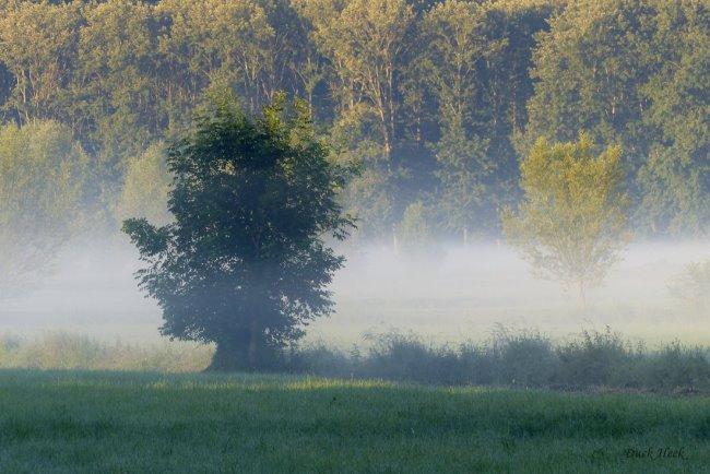 Komt nu vaker terug: mist in de laaglanden