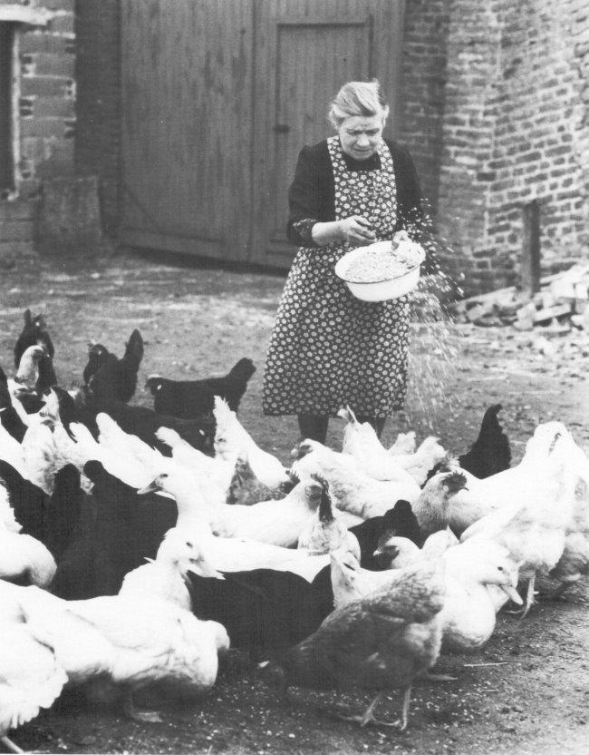 Zijn er nog kippen met vrije uitloop in Kleve?