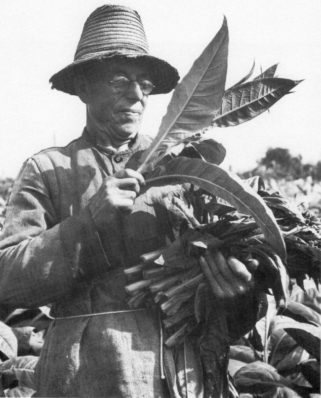 Wie heeft in het verleden tabak uit Kleverland gerookt?