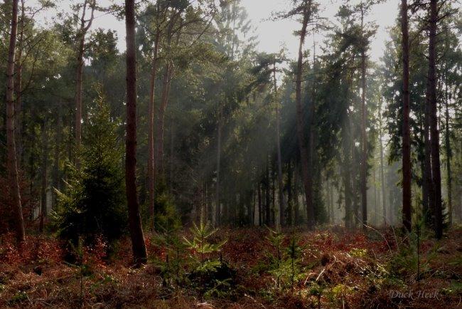 Spazierst du gerne durch den Wald bei Kleve?