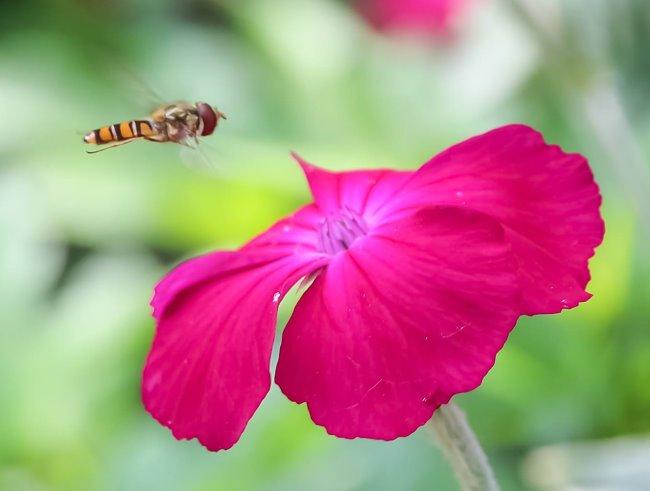 Insekten im Landeanflug - Siehst Du das auch in freier Wildbahn?