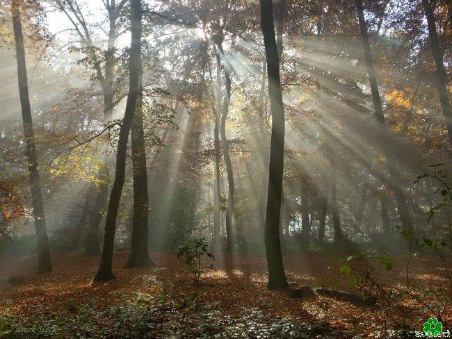 Houd jij ook zo van het Klever herfst bos?