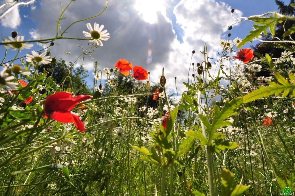Kent u een kleurrijke zomerweide in Kleef?